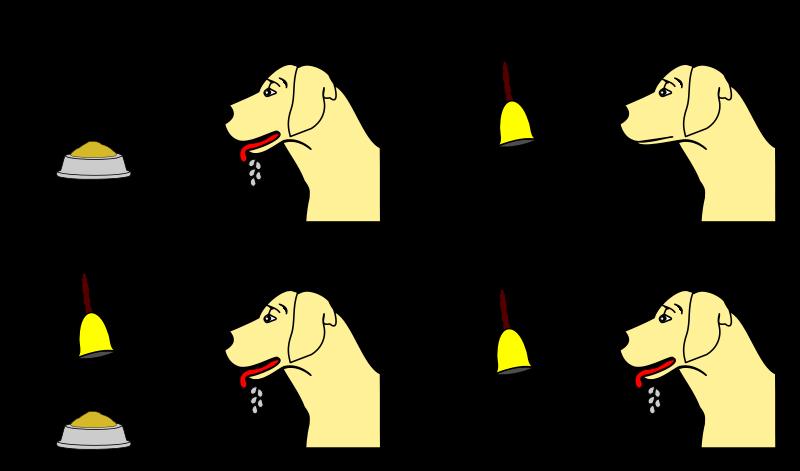 800px-Pavlov%27s_dog_conditioning.svg.png