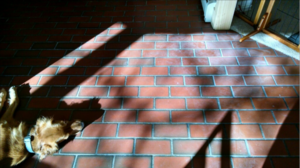 Red Brick flooring in home